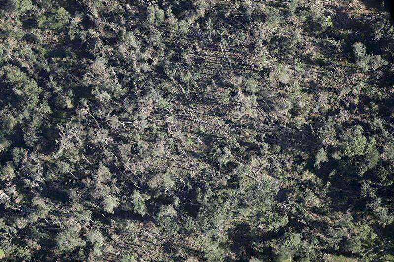 Cedar Rapids fundraising to 'ReLeaf' after derecho destroyed tree canopy