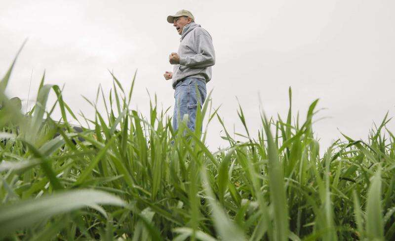 Farm Bureau flourishes as water quality flags