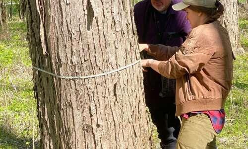 High waters killing trees, hurt hawk population