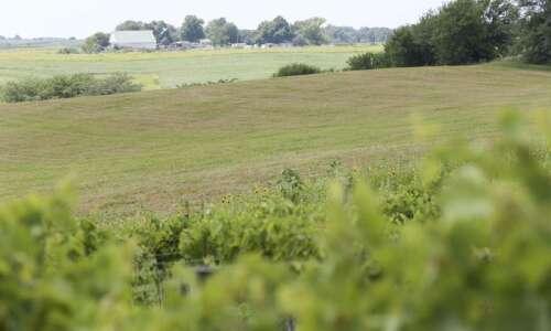 Iowa farmland value up 7.8 percent: survey