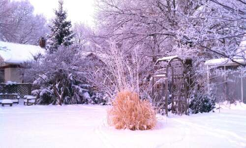 With care, gardens can thrive in winter snow and cold