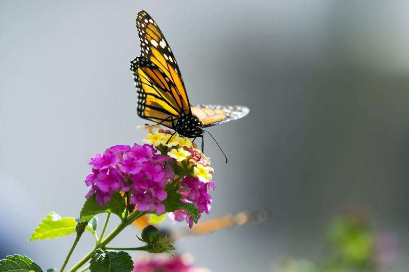 ADM to create monarch butterfly habitat