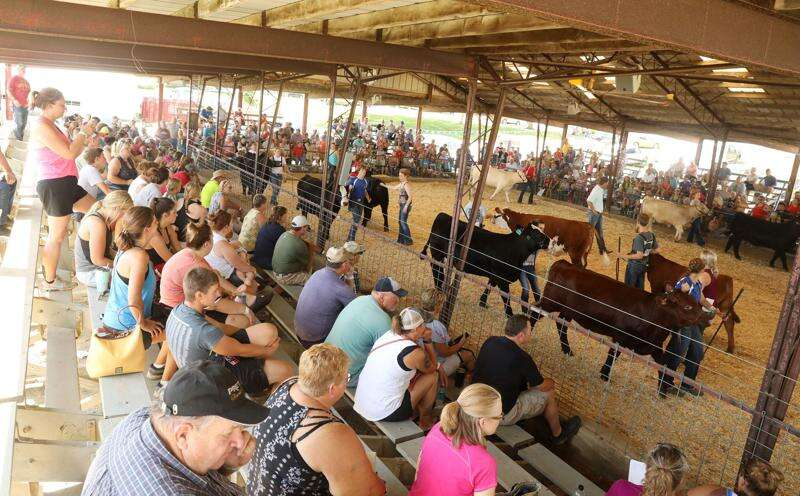 Now playing at Iowa county fairs: The waiting game