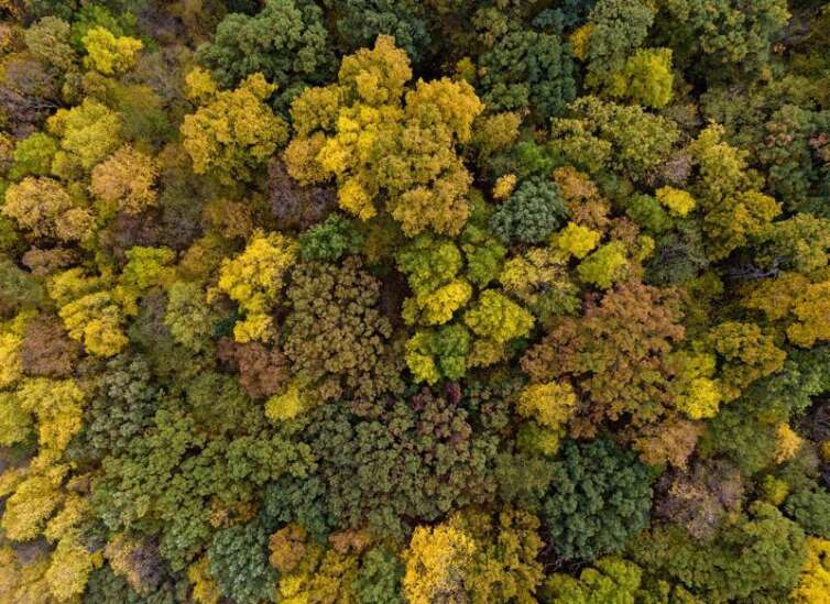 The best places to view fall foliage in Eastern Iowa