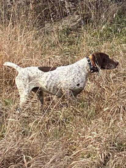 The dog days of hunting season
