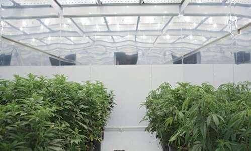 Iowa City medical marijuana dispensary to open on Highway 1