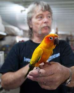 Last resort for parrots lies in rural Letts (WITH VIDEO)