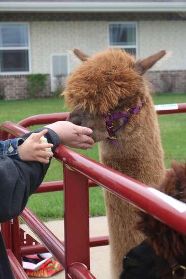 Sunnybrook celebrates farm animal day