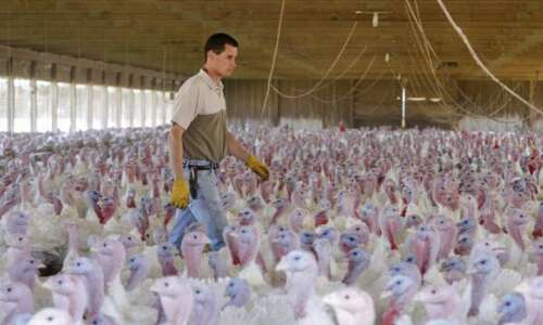 On Topic: Scary times for poultry farmers