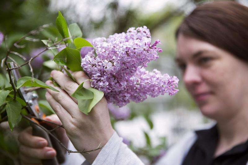 Cook Club: Bring spring into the kitchen with lilac scones