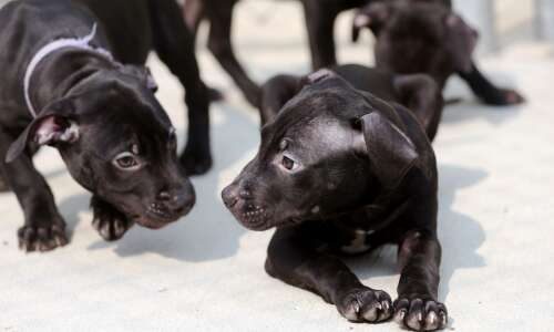 Tougher law step in 'right direction' for animal abuse cases