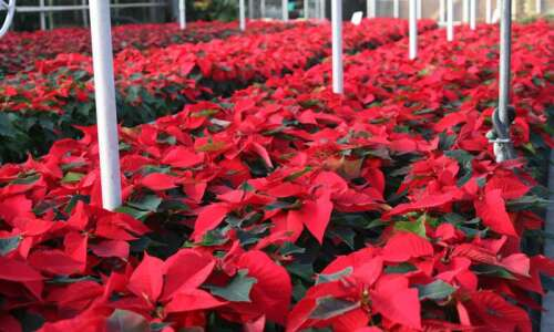 Pierson's Flower Shop and Greenhouses in Cedar Rapids is ringing…