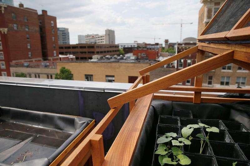 Iowa City business creates hydroponic rooftop garden