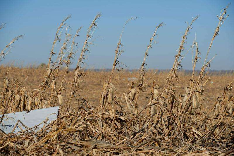 Demand from overseas helps Iowa farmers after derecho