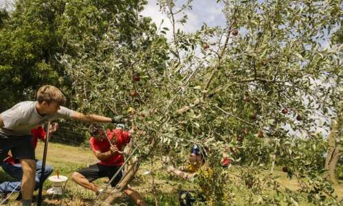 Marion orchard loses more than 800 trees in derecho
