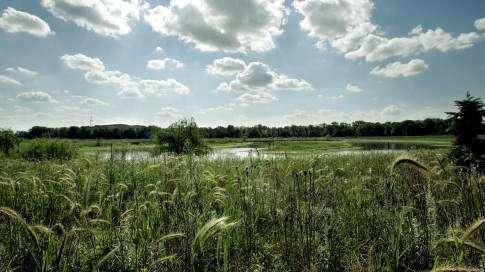 U.S. to spend $6 million on Iowa wetland restoration