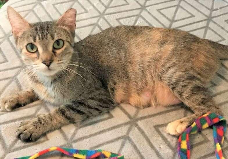 Pet of the Week: Meet Kerry