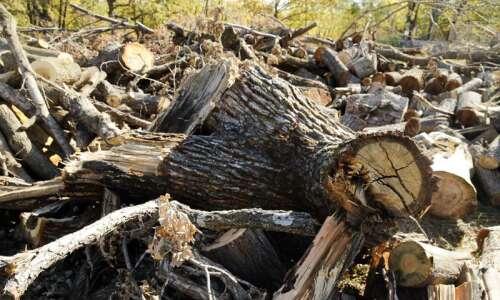 'Treasuring Our Trees' Prairiewoods online series explores healing, understanding derecho…