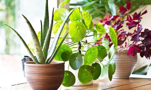 10 ways to bond with your houseplants while you're at…