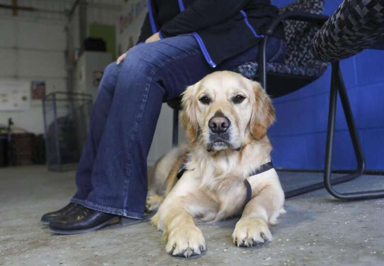 Deafinitely Dogs: Dogs respond to increased trauma and stress