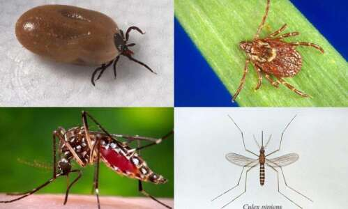 Health concerns for Iowa officials shift from flu to ticks,…