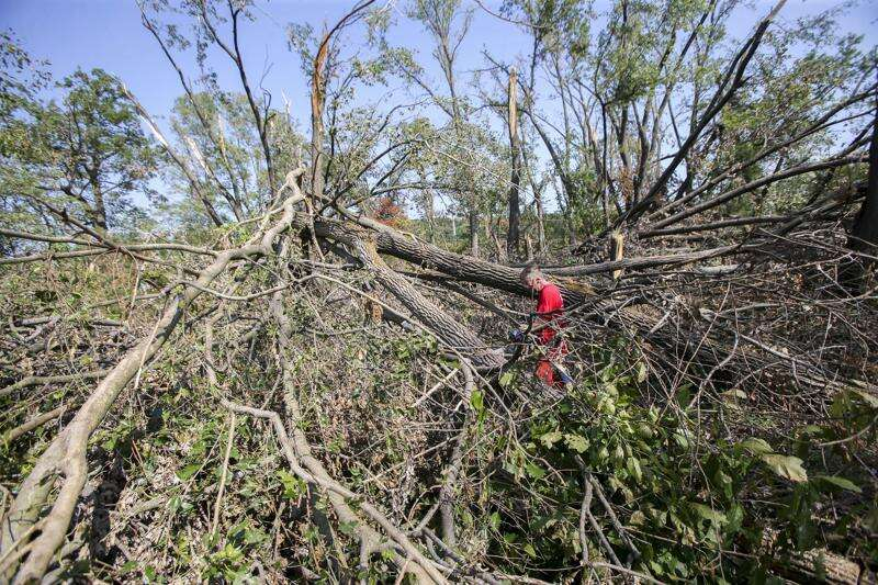 Indian Creek Nature Center works to clear derecho destruction and turn to new growth