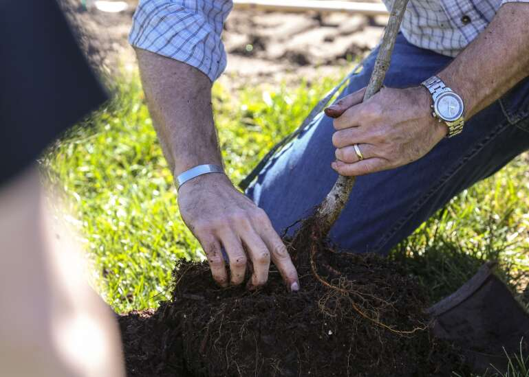 Volunteers needed for Jones County derecho recovery tree and shrub planting projects
