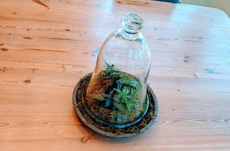 Create a terrarium using what you may already have at home