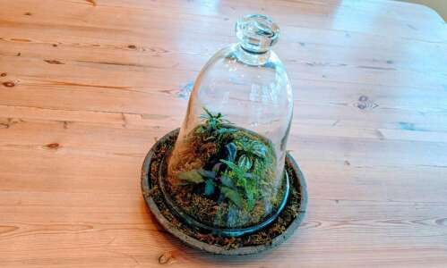 Create a terrarium using what you may already have at…