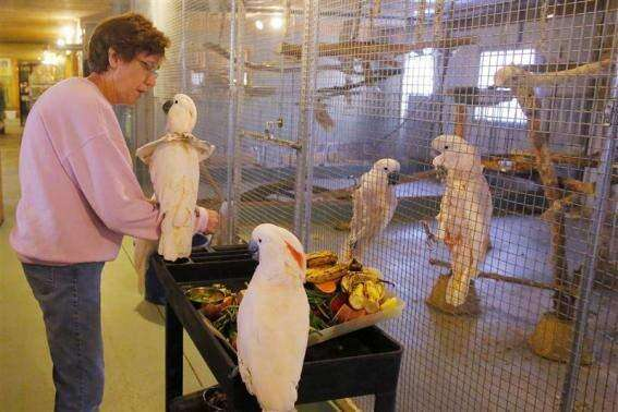 U.S. parrot rescuers struggle to keep up with unwanted birds