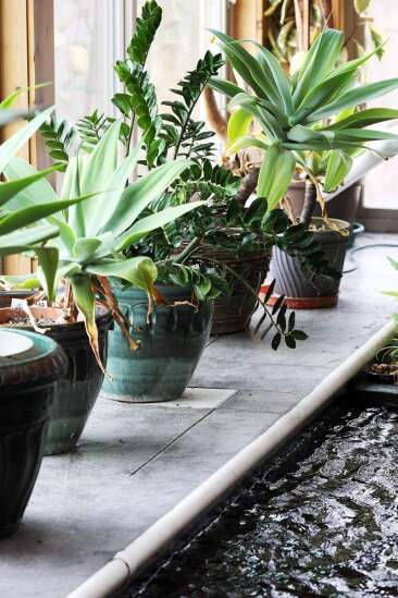 Master Gardeners: Give your plants the right amount of water