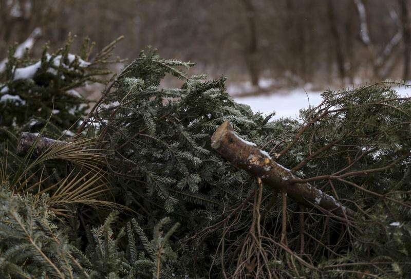 Here's how to dispose of Christmas trees, holiday trappings in Cedar Rapids, Marion, Iowa City