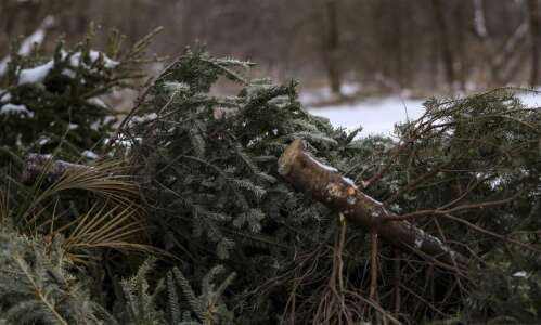 Here's how to dispose of Christmas trees, holiday trappings in…