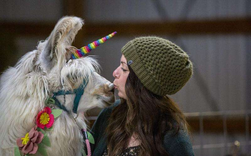Llama Zoomies: Invite a llama to liven up your next Zoom with help from an Iowa farm