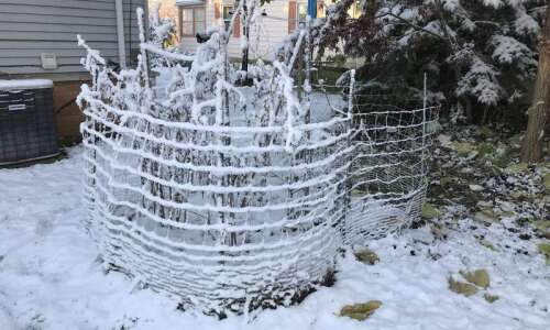 Will snow hurt your garden this winter? Here's what you…