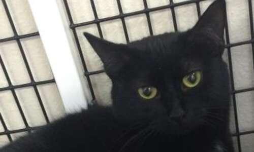 Pet of the Week: Meet Luna