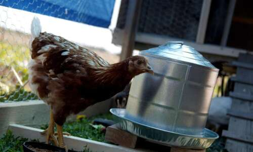 Linn County Supervisors approve chickens on residential properties