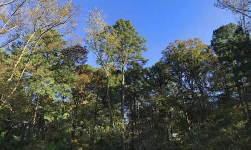 Iowa DNR plants 100,000 trees for state park centennial