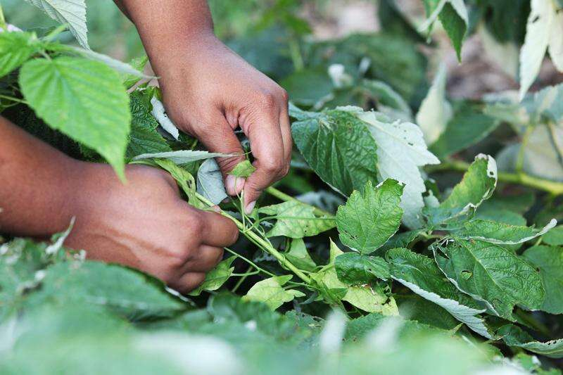 Youth development program works to Cultivate Hope on urban farm