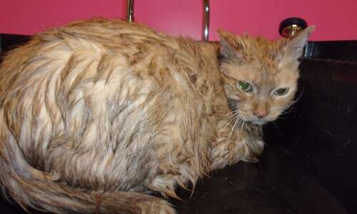 Cat thrown into Cedar River is recovering