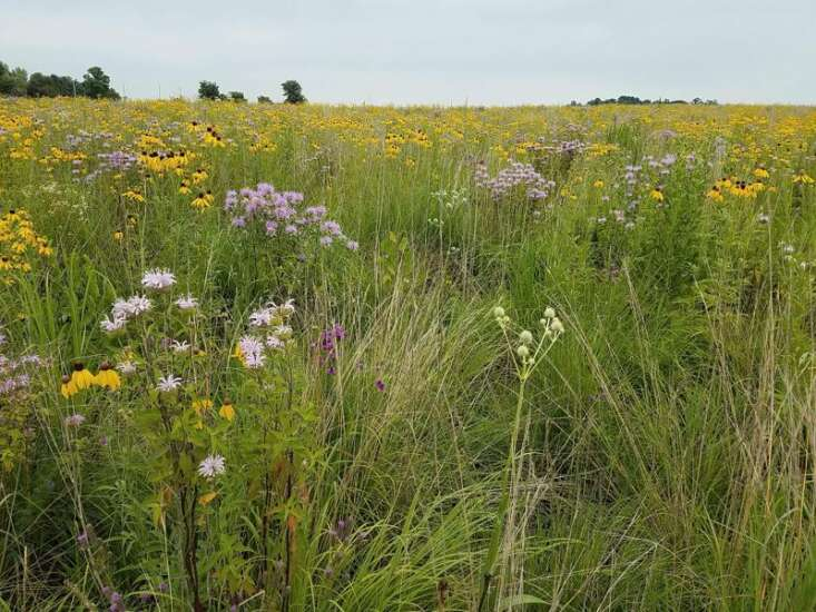 Replanting the landscape: From derecho to natural diversity