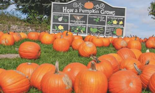 Pumpkin patches, petting zoos, like Bass Family Farms near Mount…