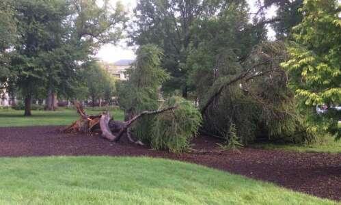 Treasured University of Iowa tree taken down by storm