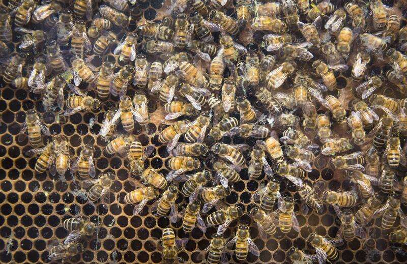 Bees are critical to our survival