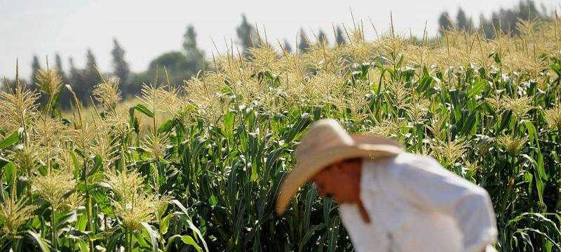 FDA to pay for pro-GMO campaign