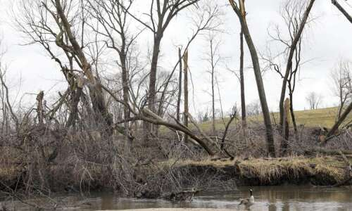Crews to begin removing derecho debris from Linn County waterways