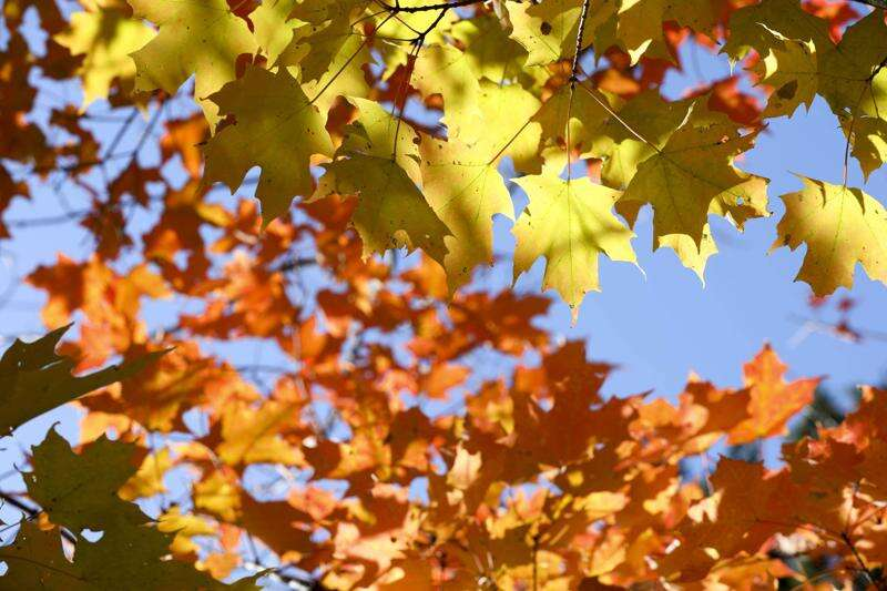 Fall color is peaking in Eastern Iowa soon, here are some ideas of where to soak it in