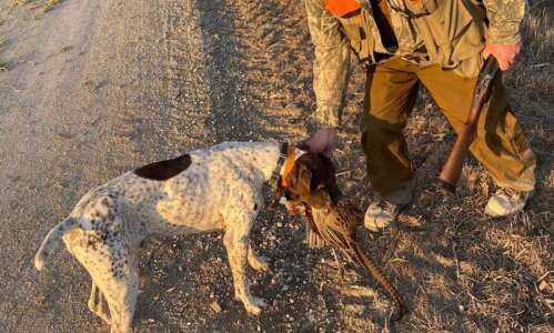 Aging outdoorsmen find fun, and pheasants, in ditch