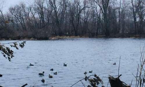 A hunt for elusive ducks