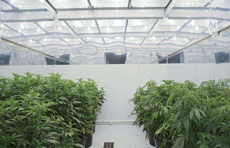 Medical marijuana dispensary license approved for Iowa City